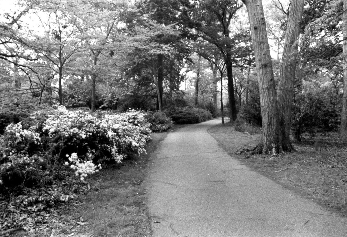 Norfolk Azalea Gardens