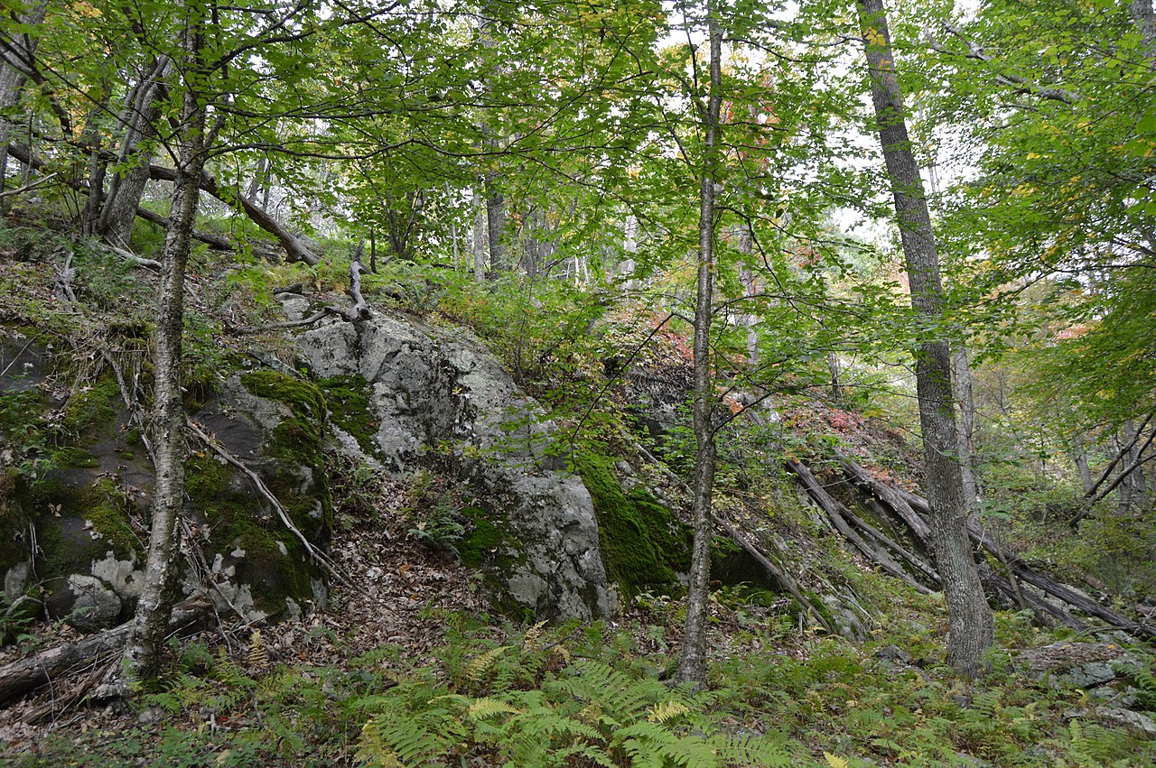 Cliff Kill Site
