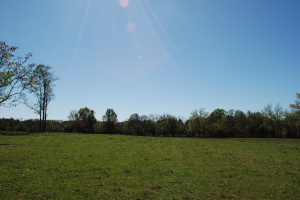 Photo shows open pasture