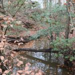 View of creek and woods.