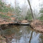 Creek in the Rock Tract.