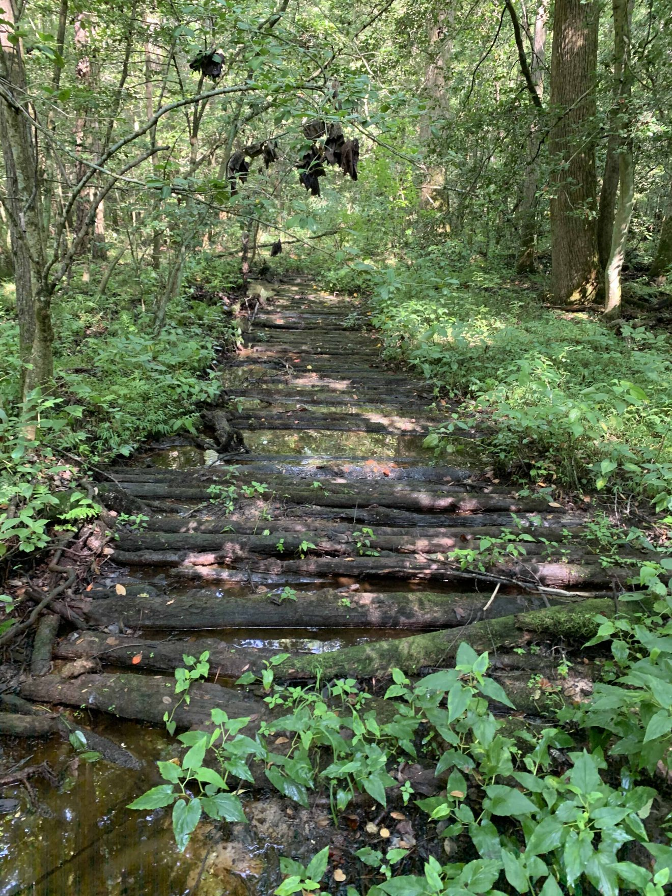 Log road through wetlands