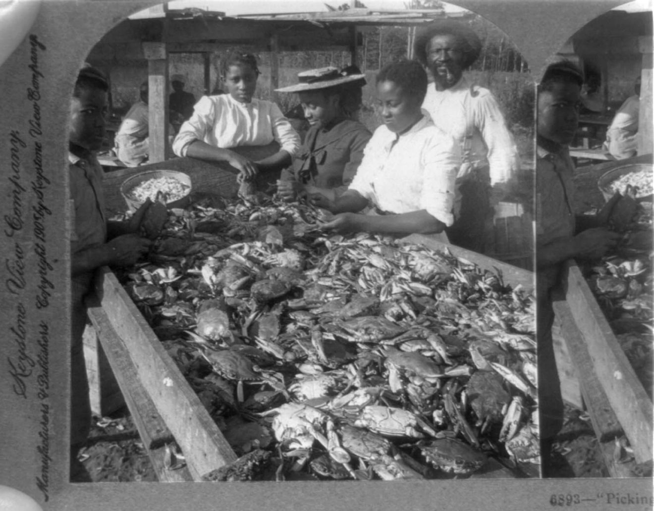 picking crabs LOC