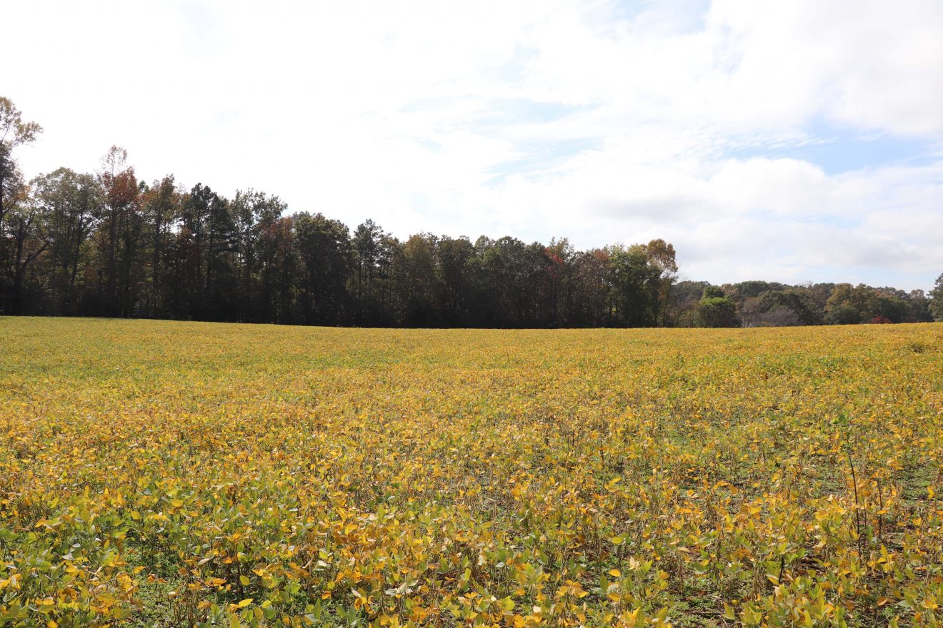 Cold Harbor Road Tract lower res