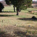 Fieldstones mark graves