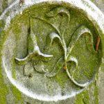 Broken lily stem